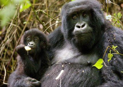Rwanda & Uganda Combined Safari