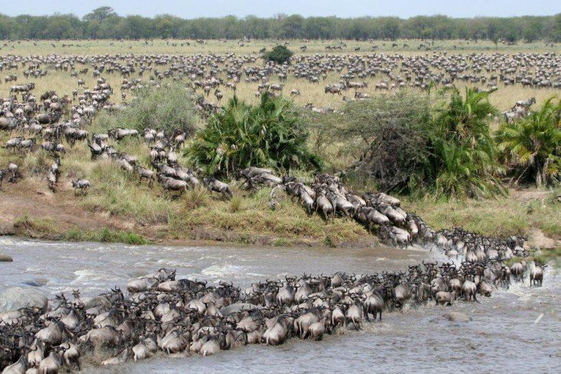 Mara-migration…