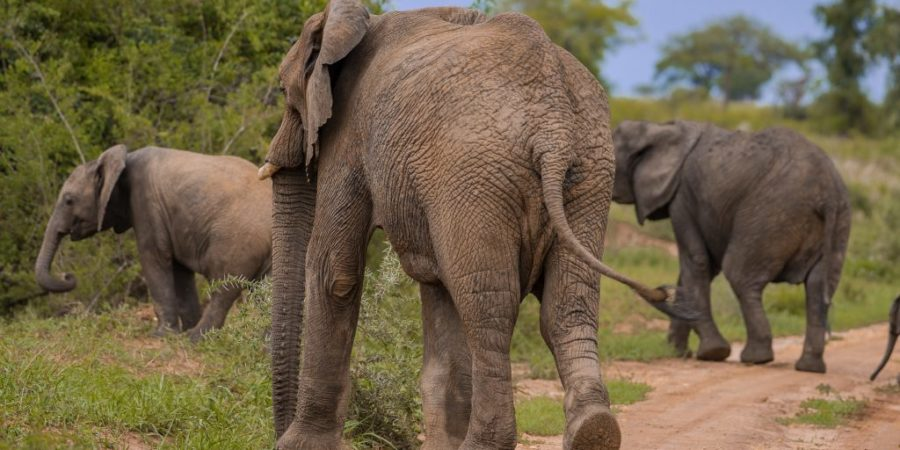 Elephants in Kidepo Valley national park