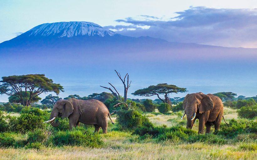 Tazania Safari