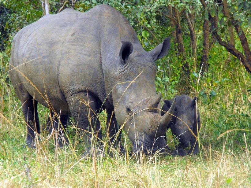 Ziwa-Rhino-Sanctuary2