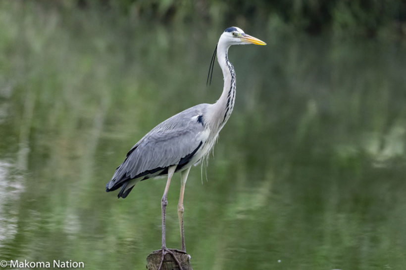 bird-in-kidepo