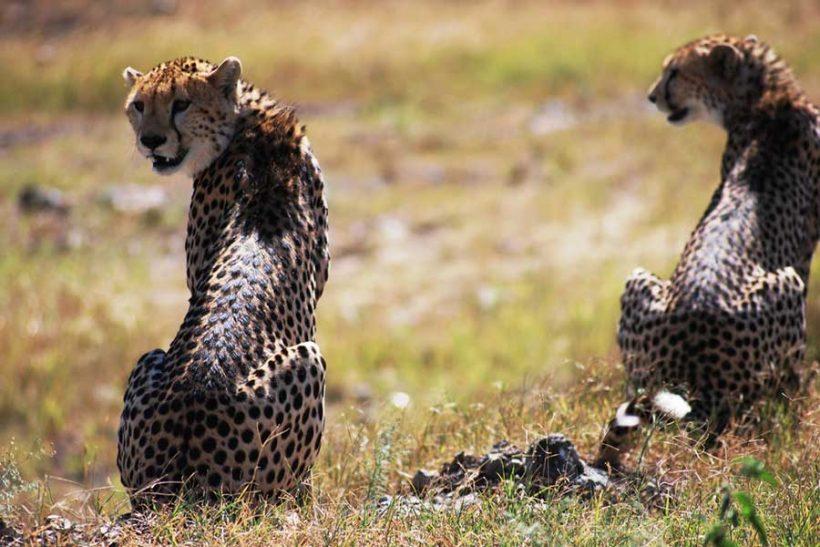 6 days Discover Kenya Safari