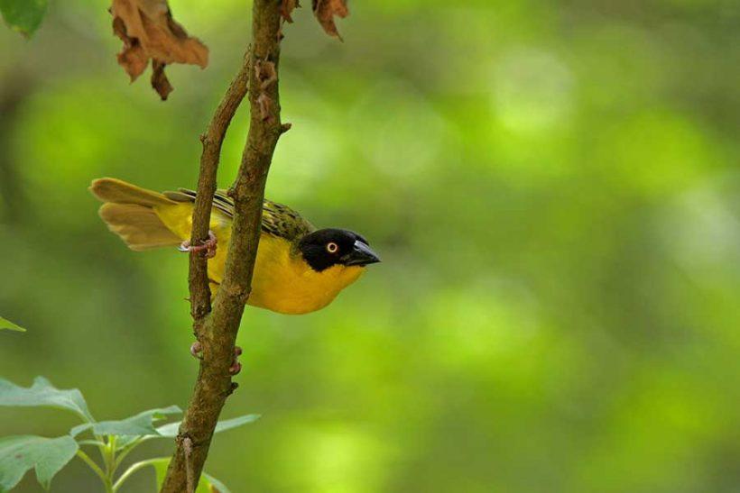 birding-kibale