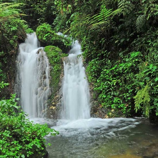 Bwindi impenetrable forest - most beautiful places in Uganda