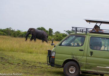 on-safari-uganda