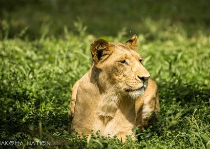 Uganda & Rwanda Combined Safari